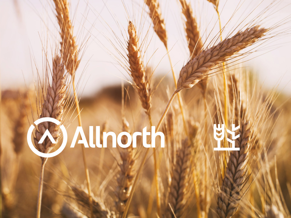 Allnorth to engineer first-of-its-kind wheat straw pulp mill in Germany for Essity, one of world's largest tissue companies